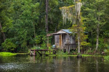 Best New Orleans Swamp Tours