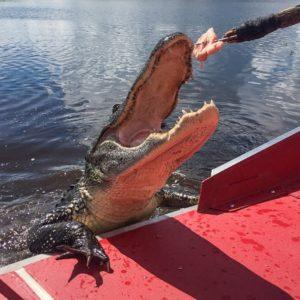 bayou-swamp-tours-8-min