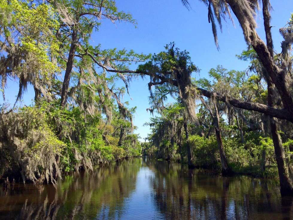 bayou-swamp-tours-min